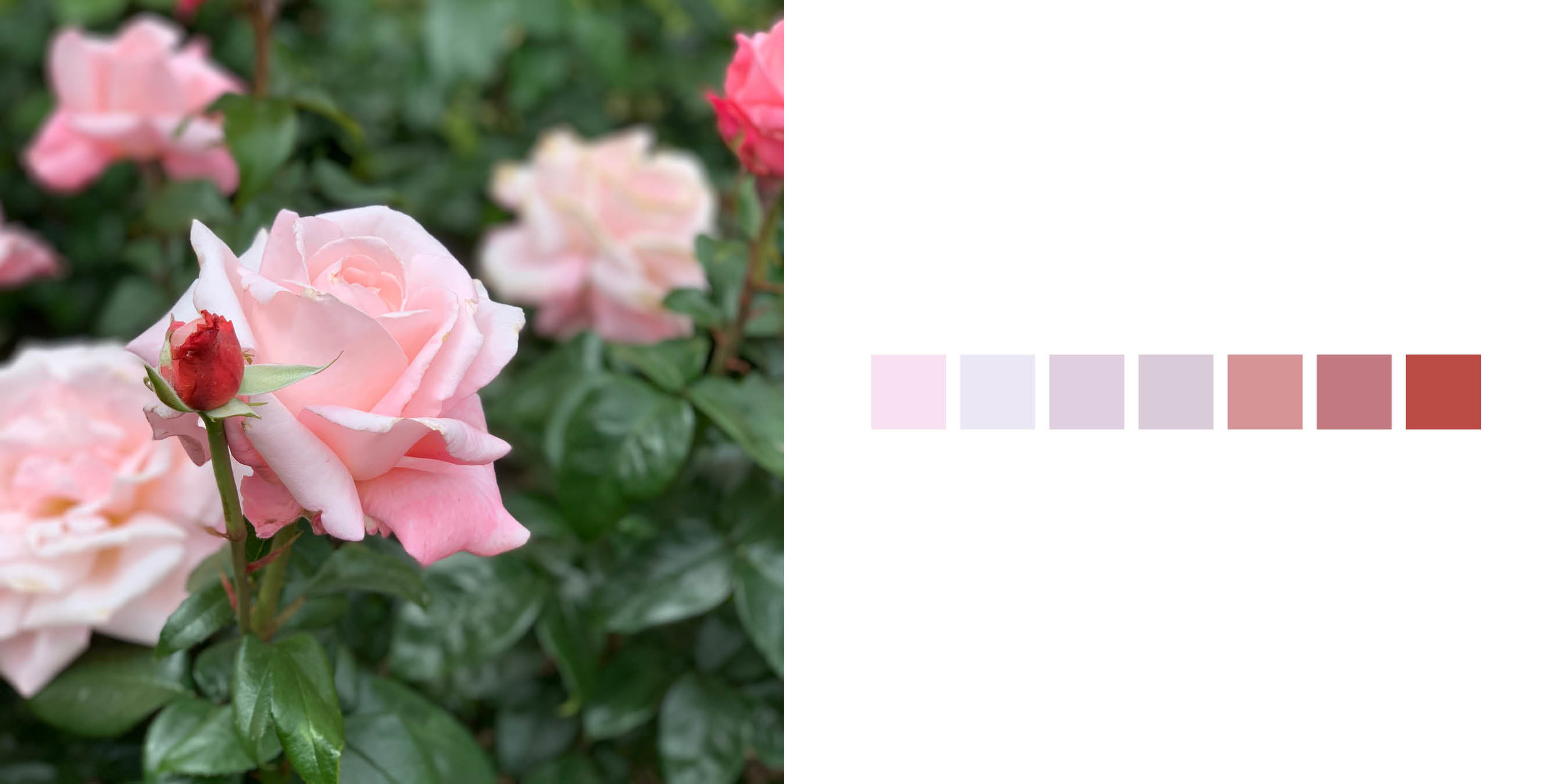 The Rose Book14.jpg