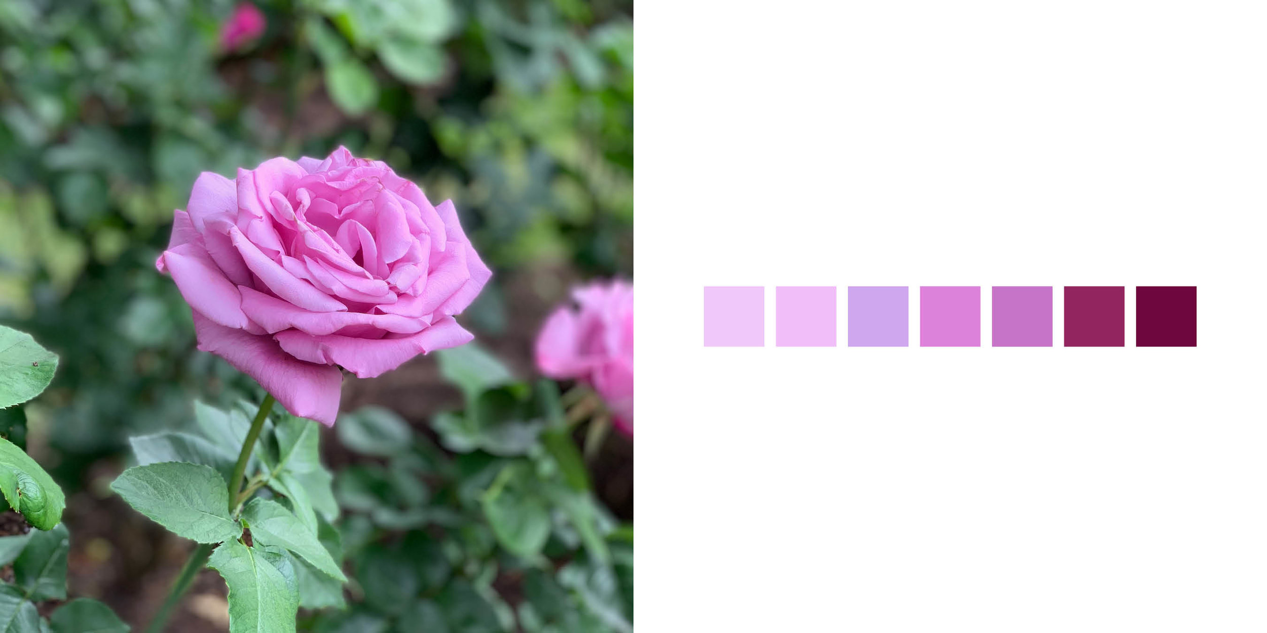 The Rose Book16.jpg