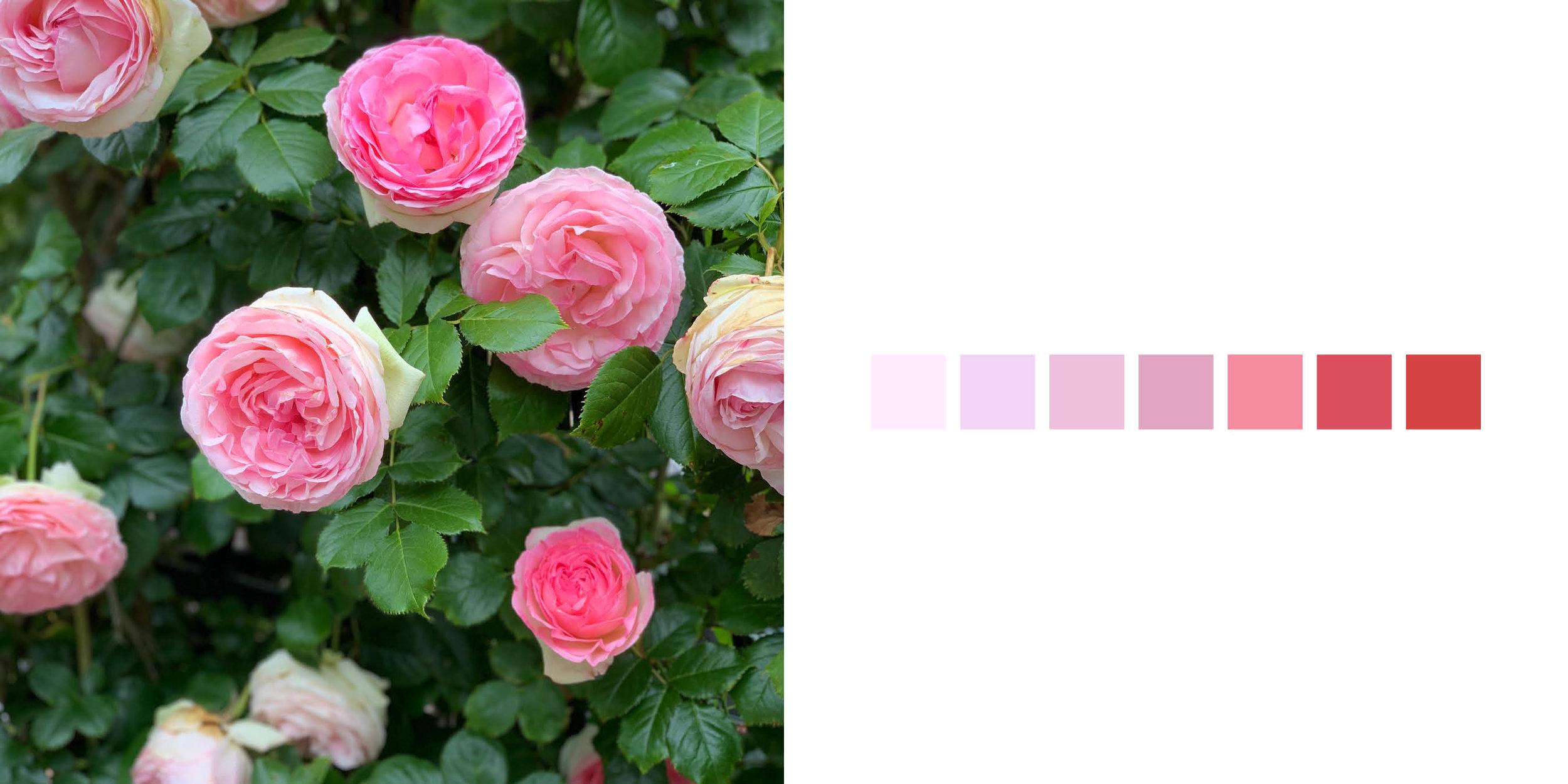 The Rose Book15.jpg