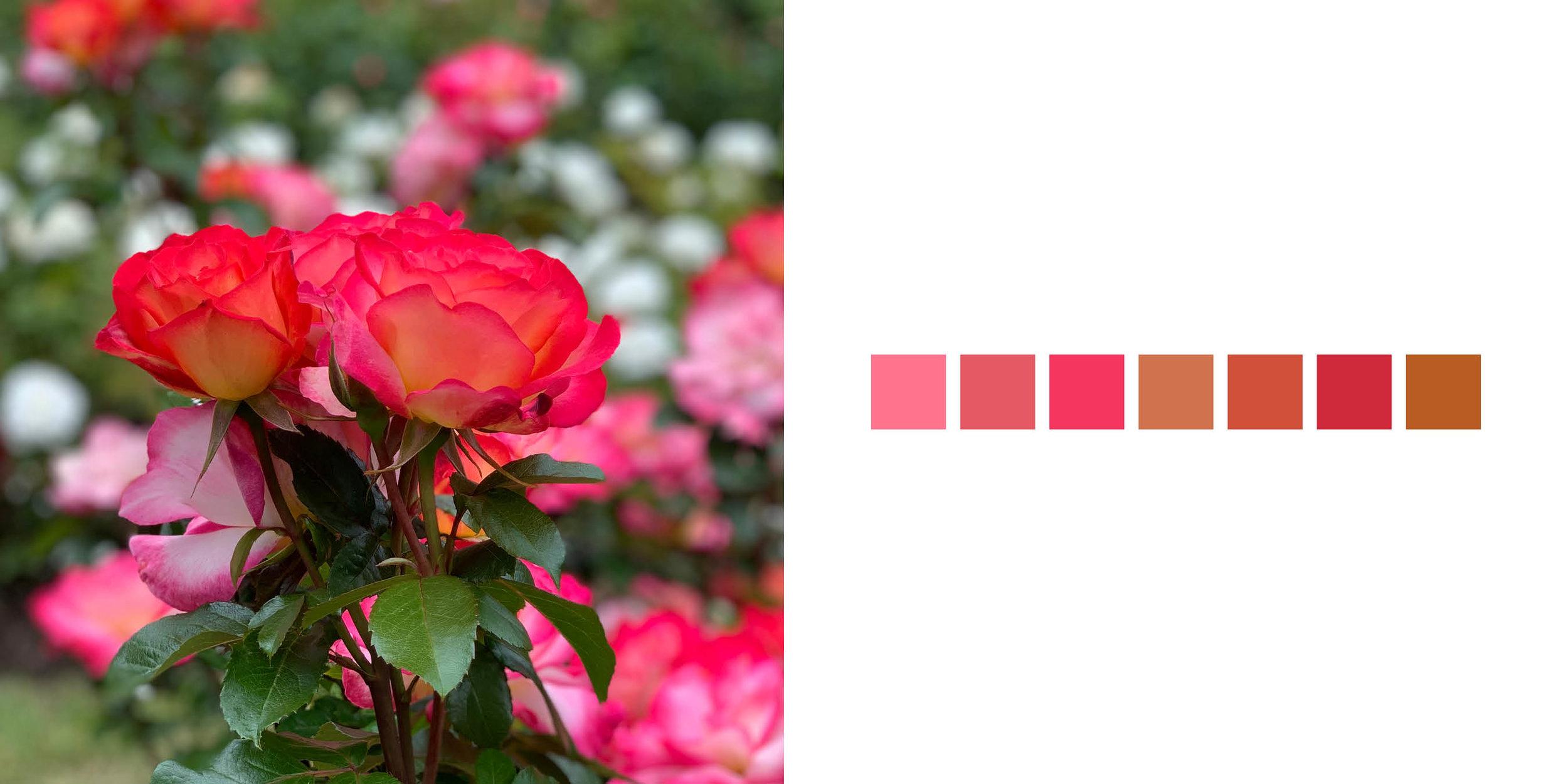 The Rose Book17.jpg