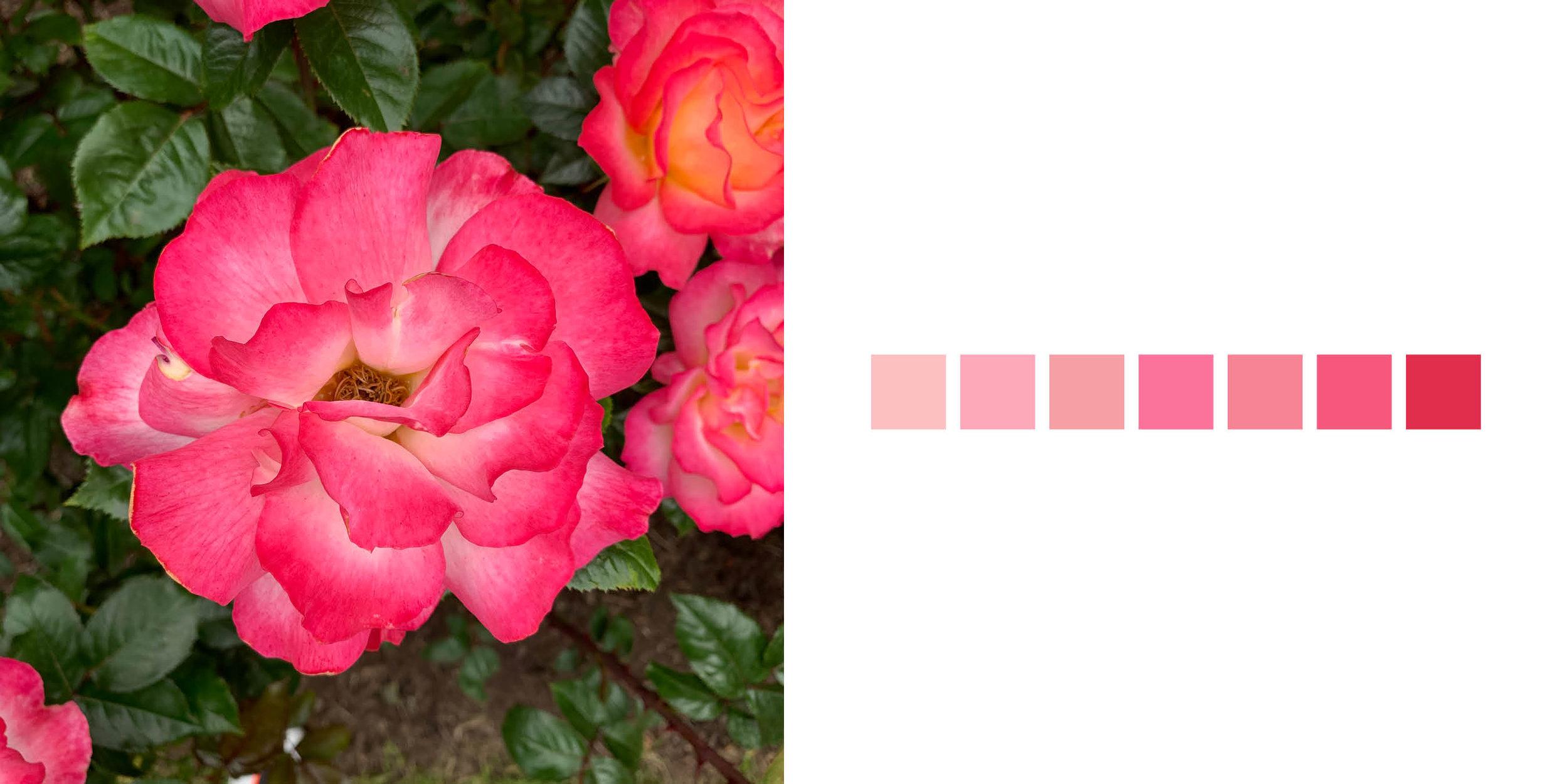 The Rose Book18.jpg