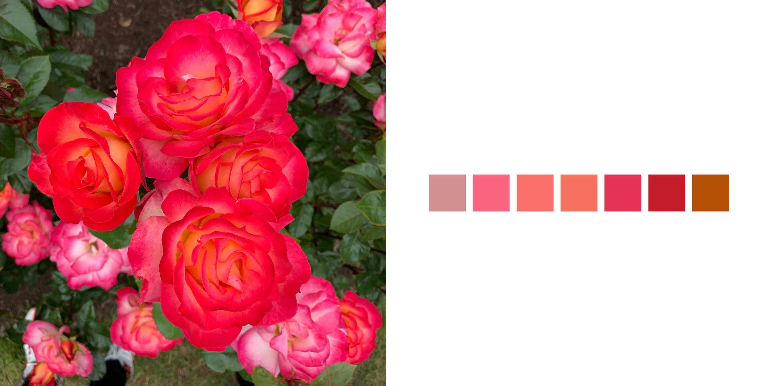 The Rose Book19.jpg
