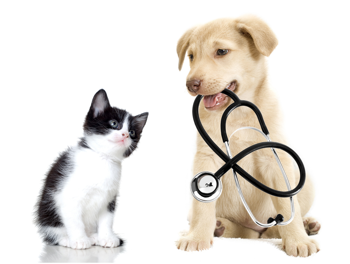 TN Veterinary CPA