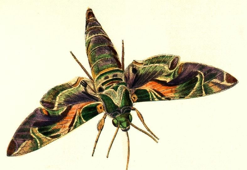 moth-picture-copy.jpg