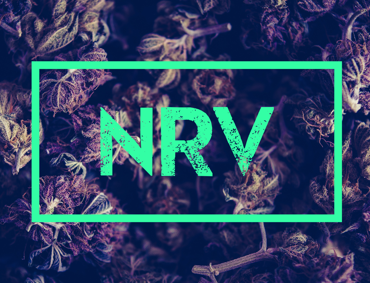 Nerve_logo_Layer Comp 2.jpg