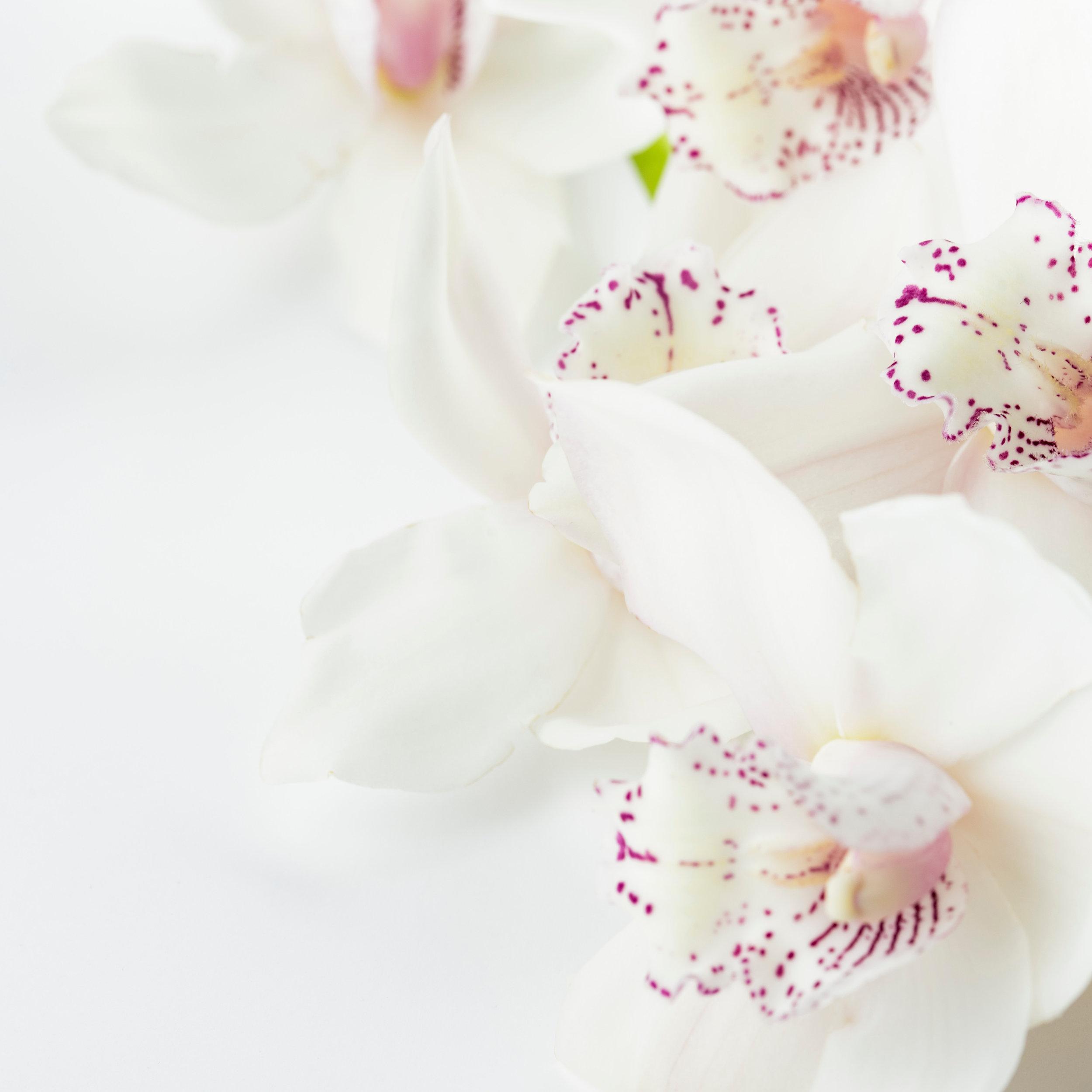 whiteflower-2.jpg