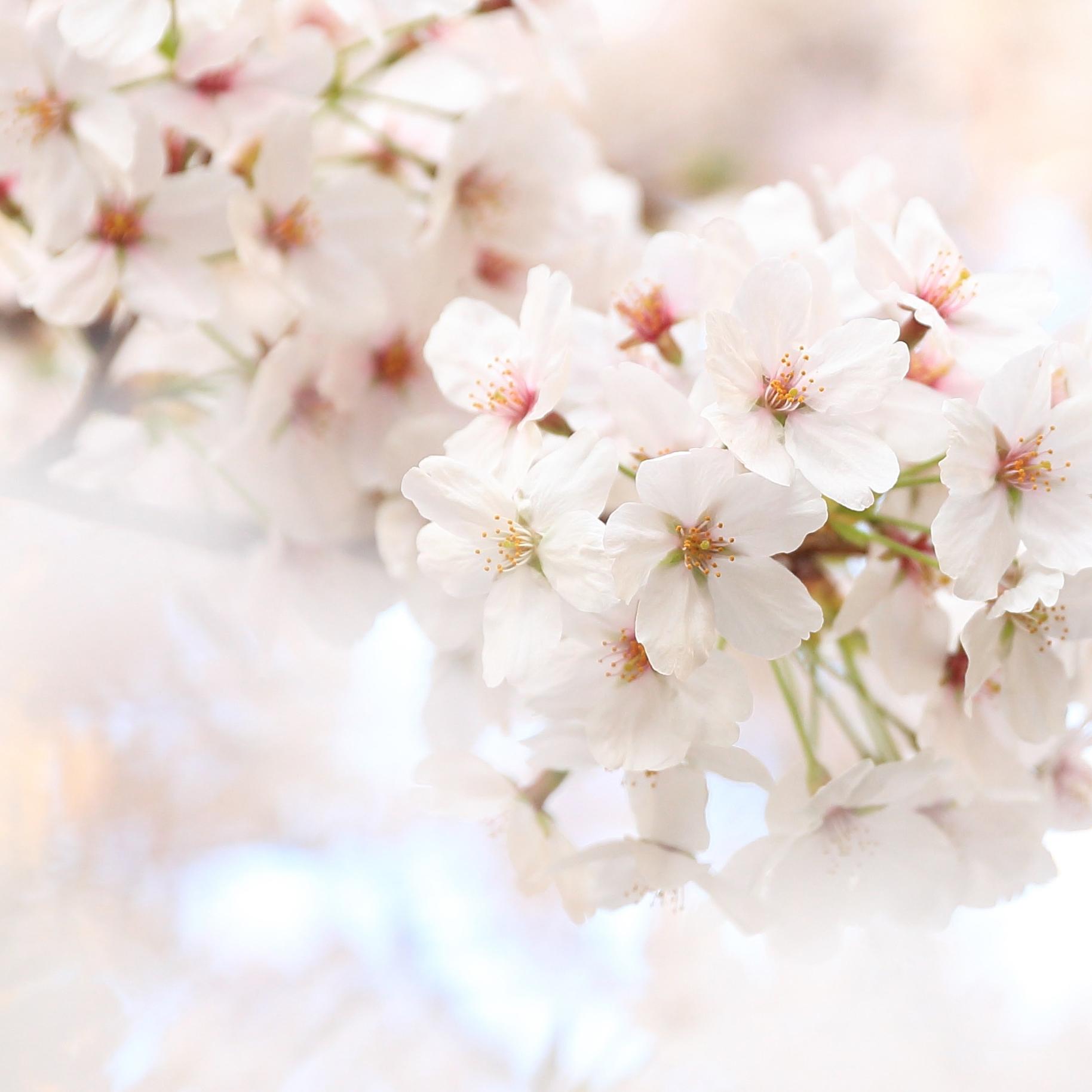 whiteflower-5.jpg