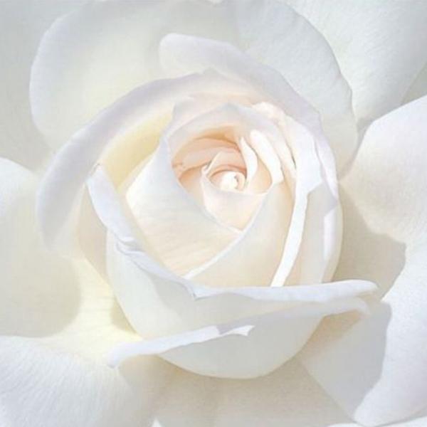 whiteflower-4.jpg