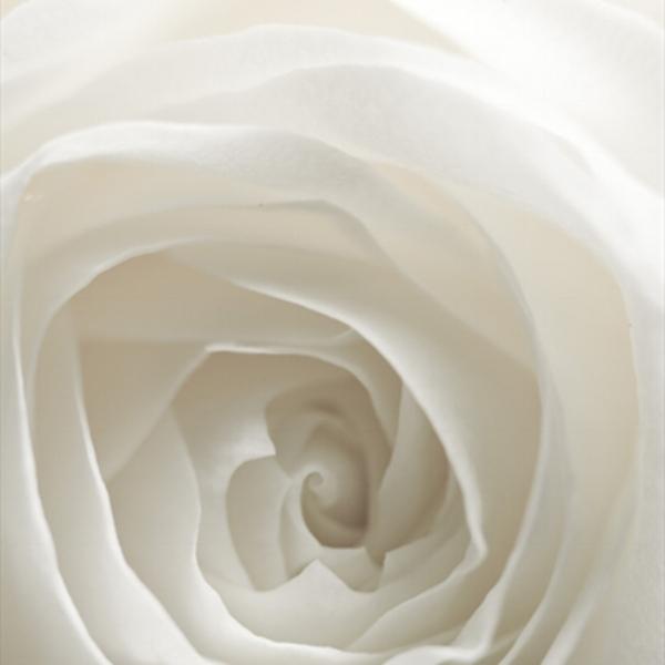 whiteflower-1.jpg