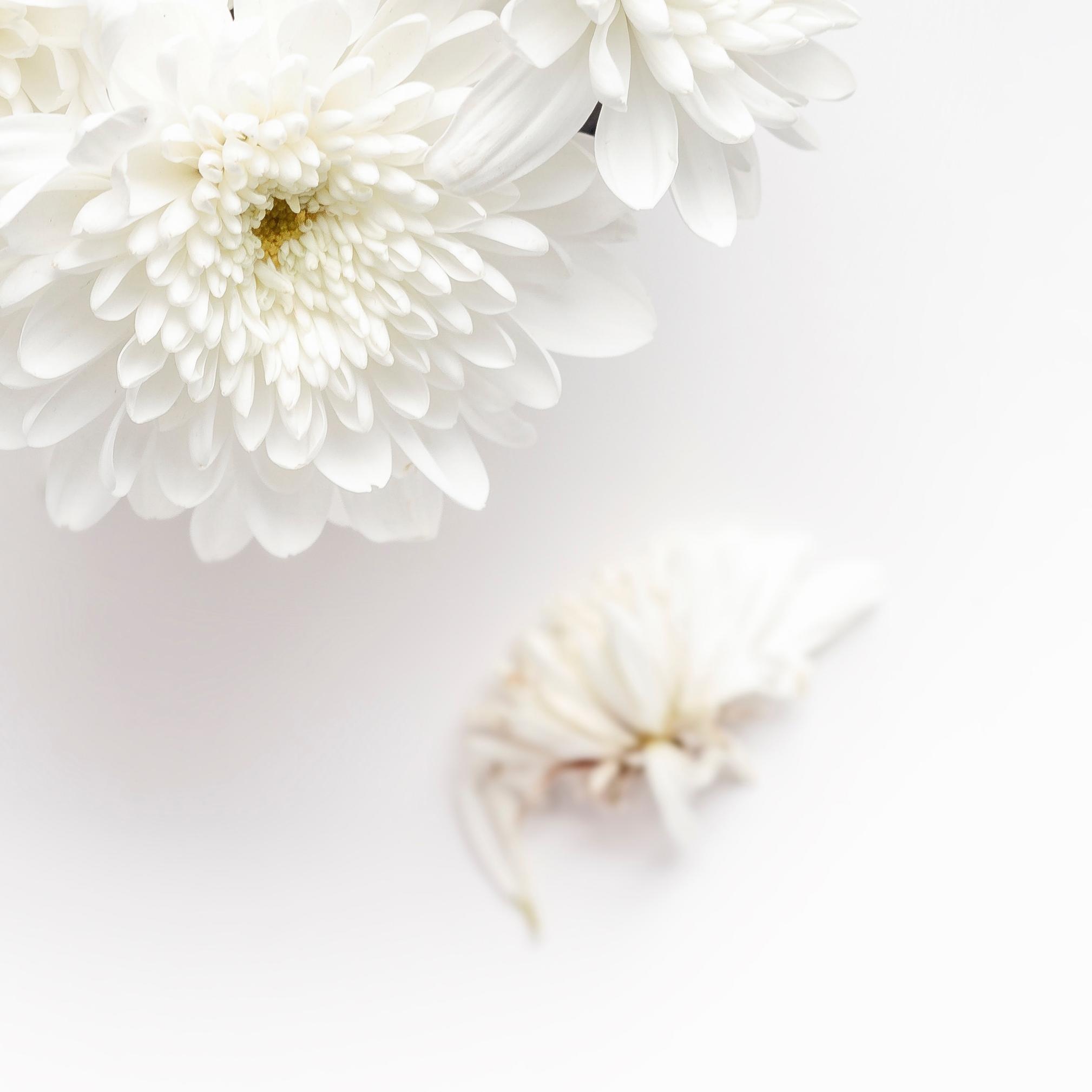 whiteflower-3.jpg
