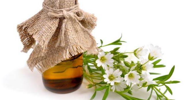 Learn How Hemp Oil can change your life!.JPG