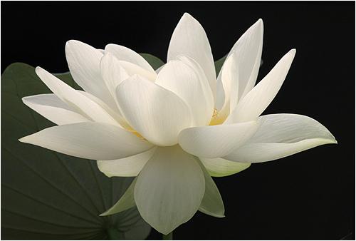 Day of Dead Kundalini flower.jpg