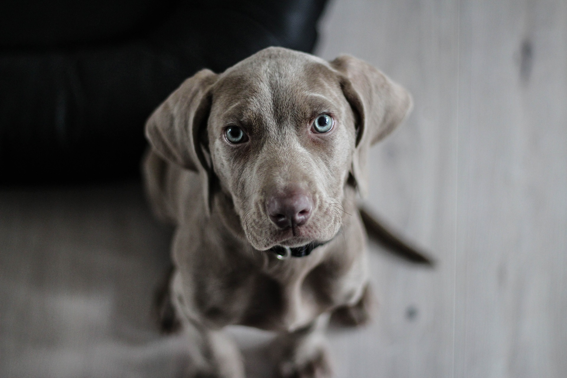 dogsafe puppy.jpg