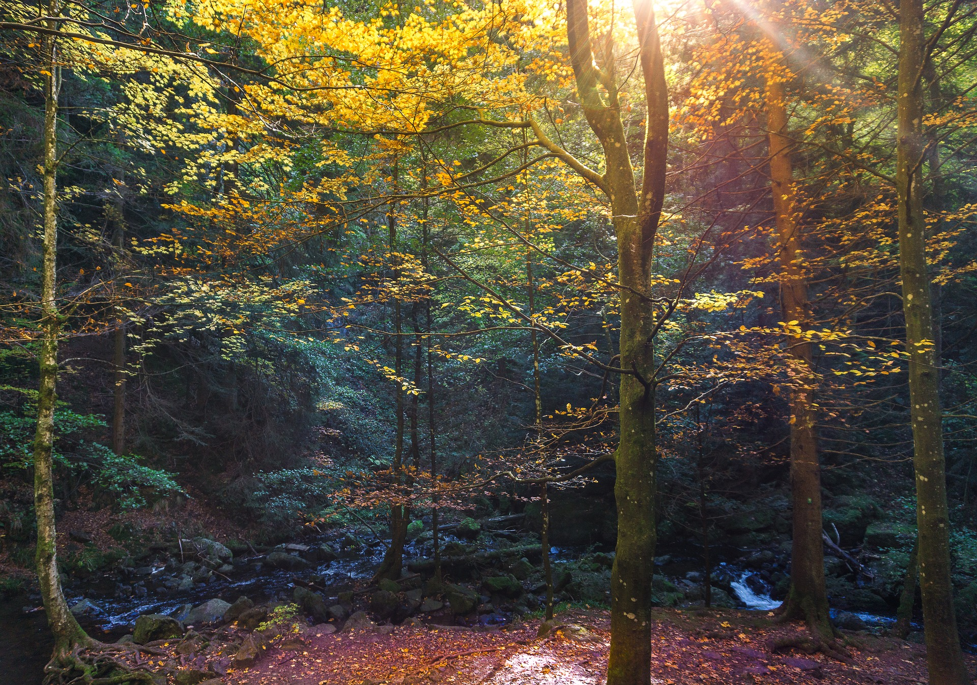 Forest Friday Hike Visual.jpg