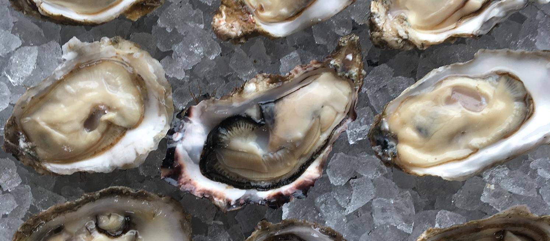 oyster_array.jpg