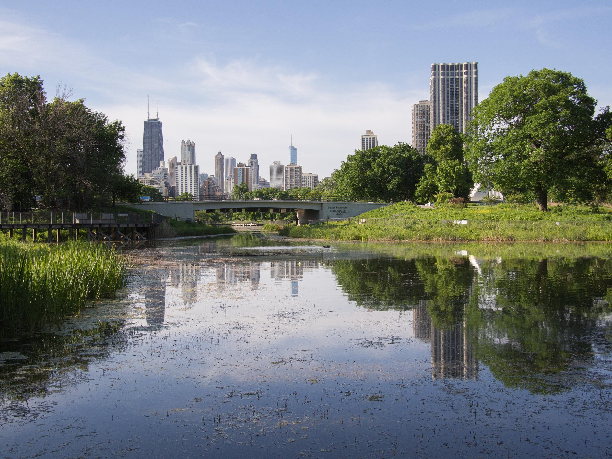 Debbie Poulin  Lincoln Park/Lakefront