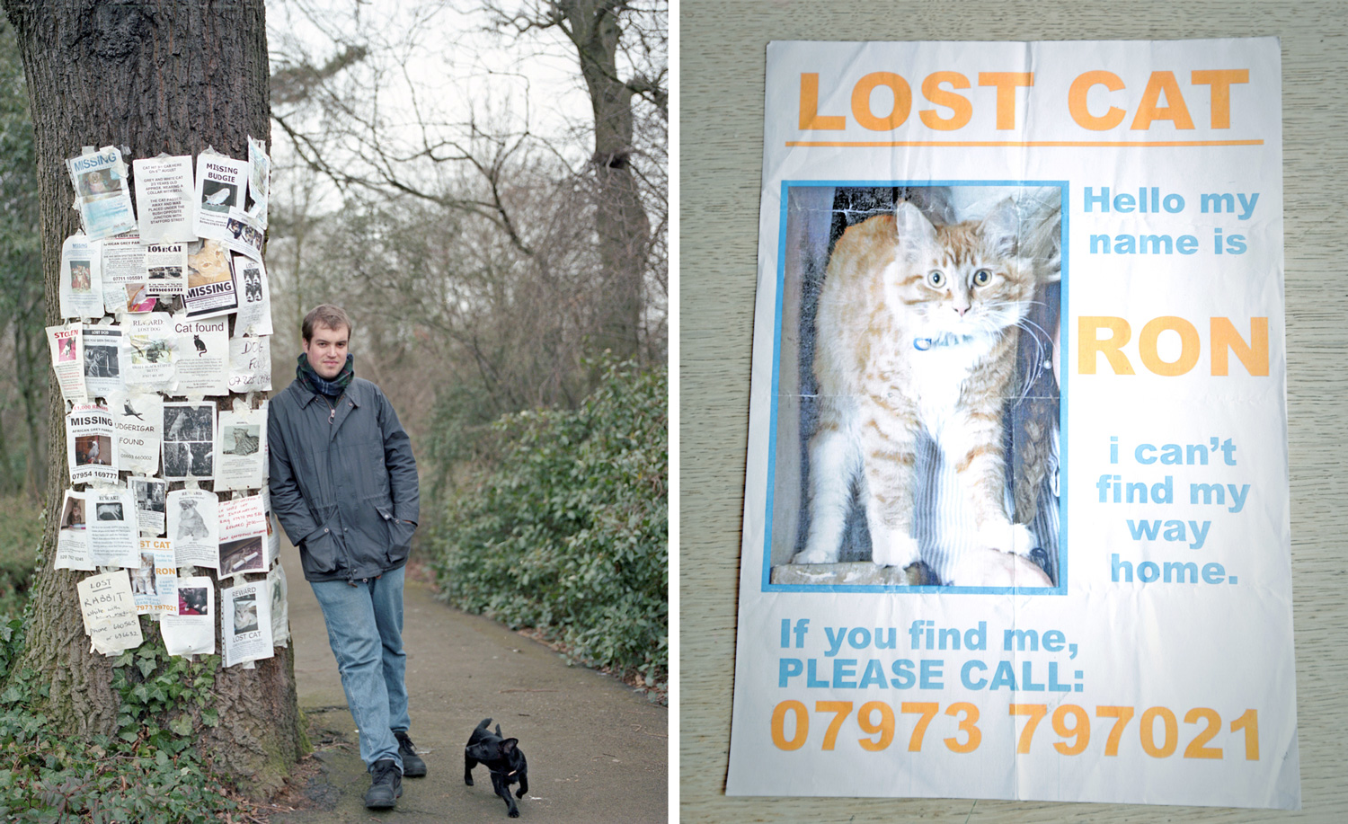 Ed  Missing Pet Posters
