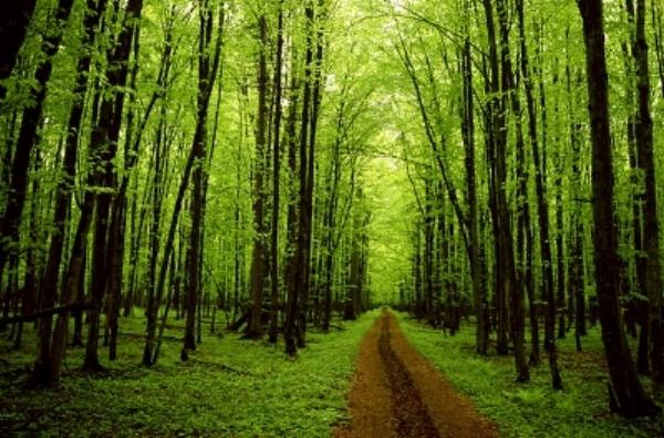 franklin_trees_01.jpg