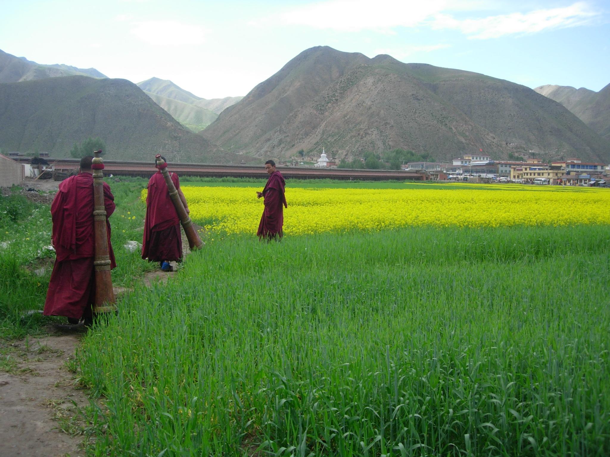 Tibetan Monks 6.JPG
