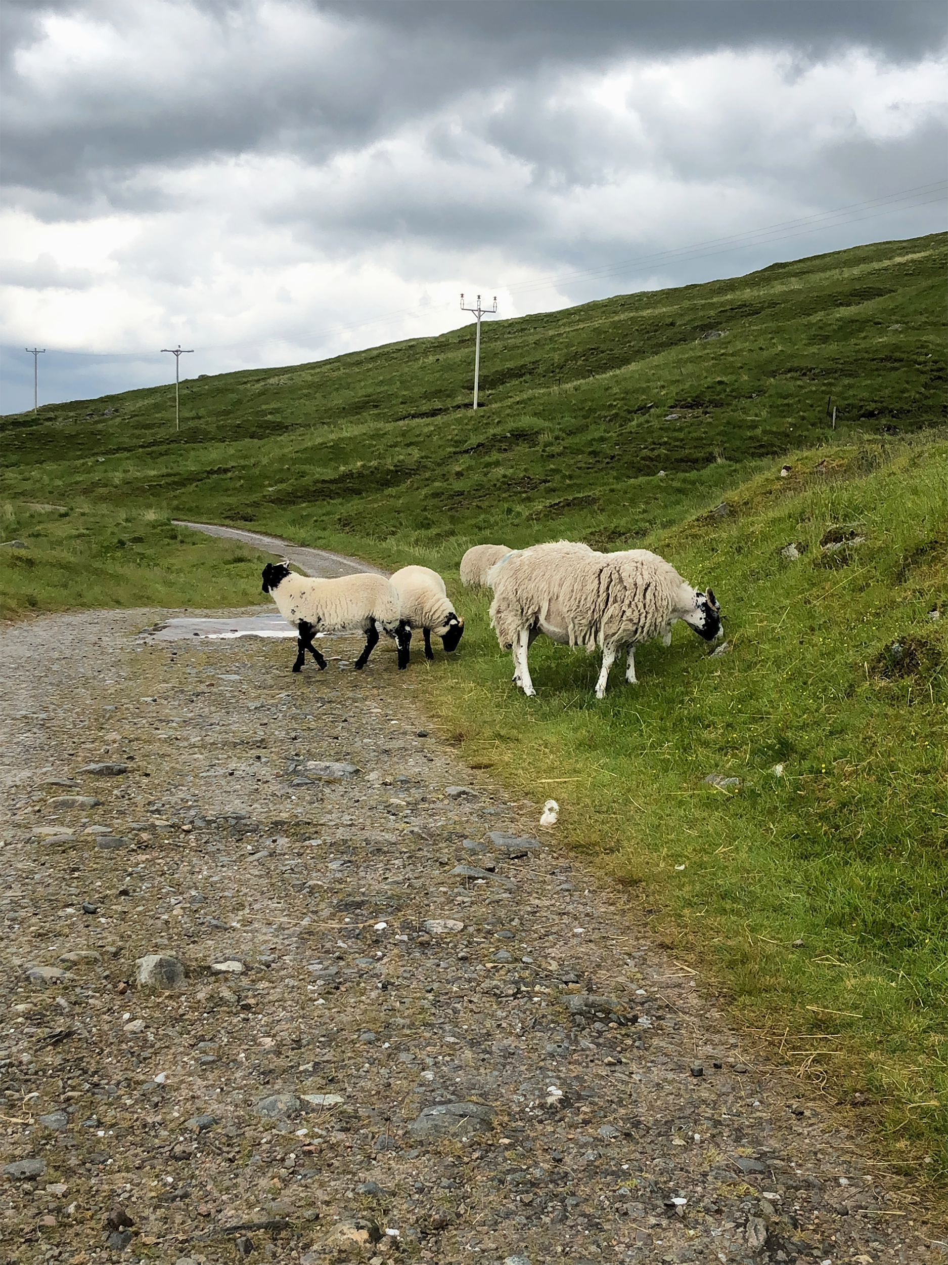 Scotland is full of sheep, we saw so many as you are sometimes walking through local farmers land.