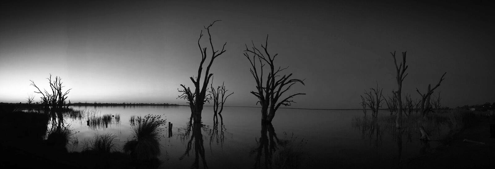 Still photography -