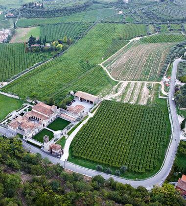 Vigneti_Torre Allegrini Winery