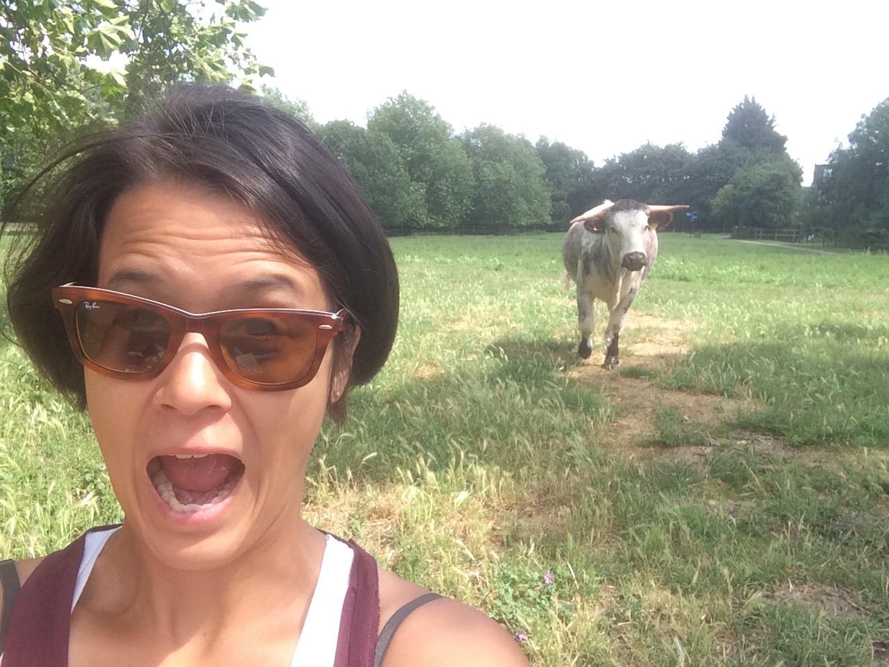 Never a bull moment! (wah-wah)