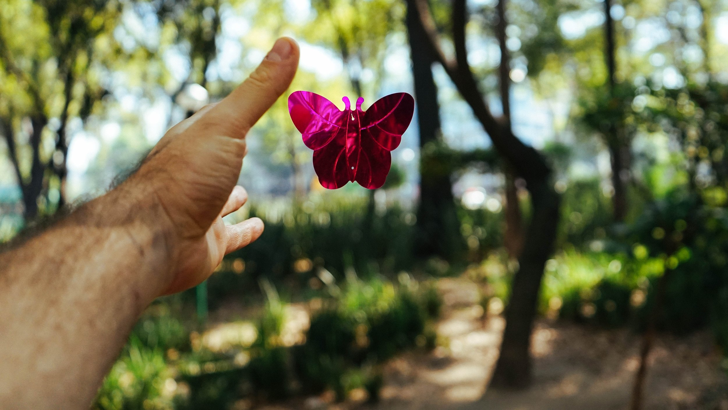 man releasing pink shiny butterfly into forest