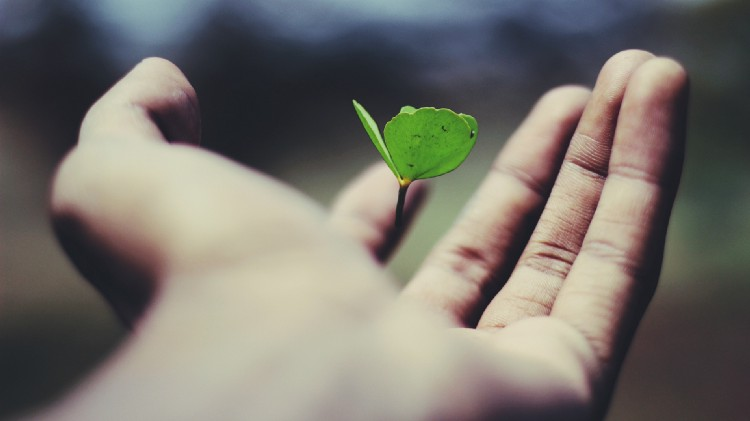 Hand opening to reveal leaf