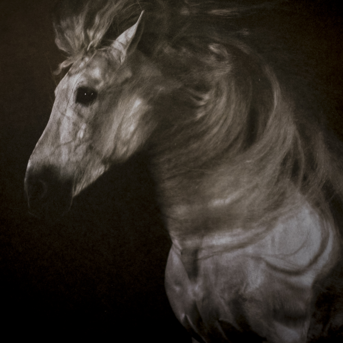 Yann Arthus-Bertrand, Chevaux/Horses.   The lusitaner stallion Templado on the flyleaf of a book about horses that comes close to perfection, it is useless even to try making something better. The way in which Arthus-Bertrand is working in a kind of outdoor studio for horse photography is outstanding.