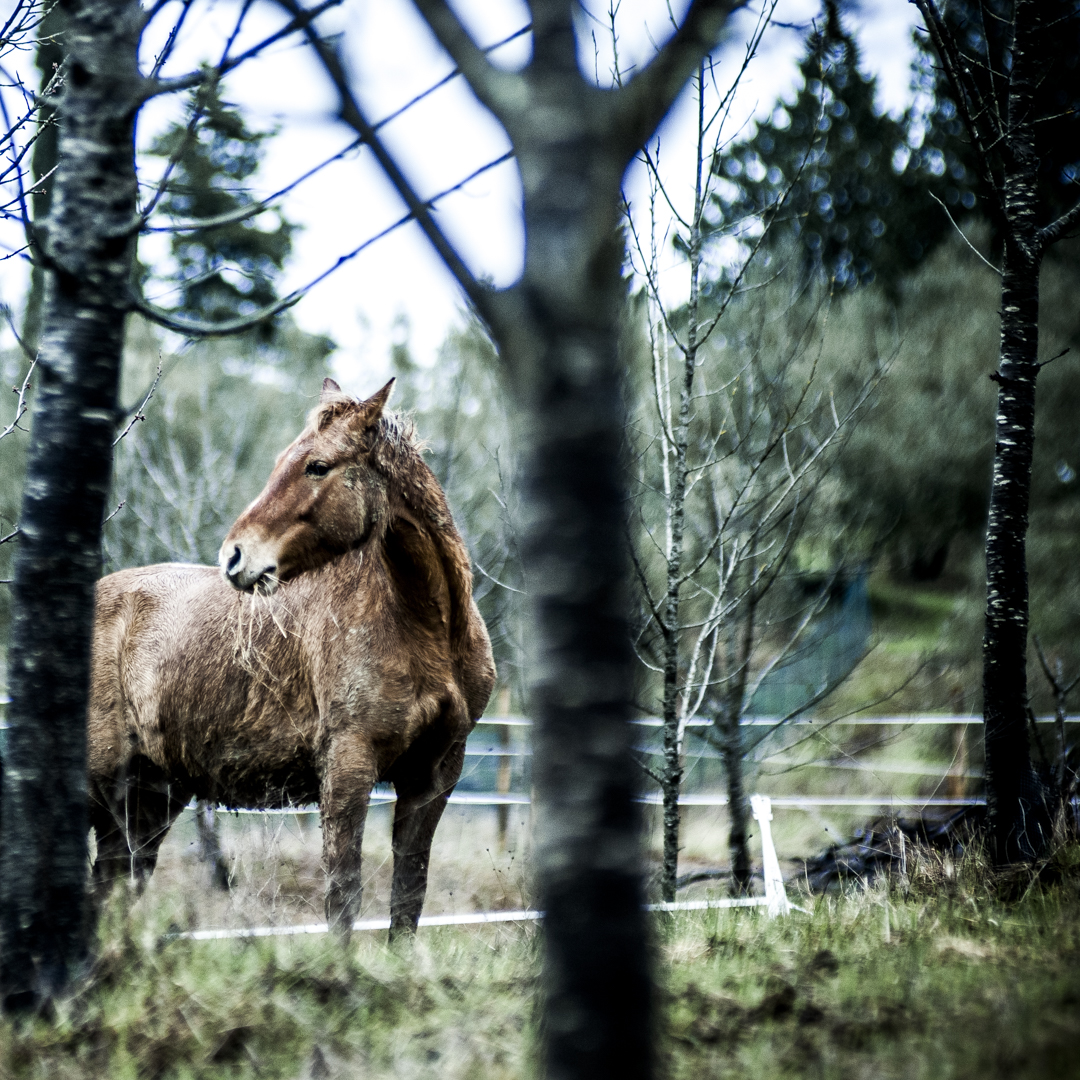 the horses don't care. They feel that spring is