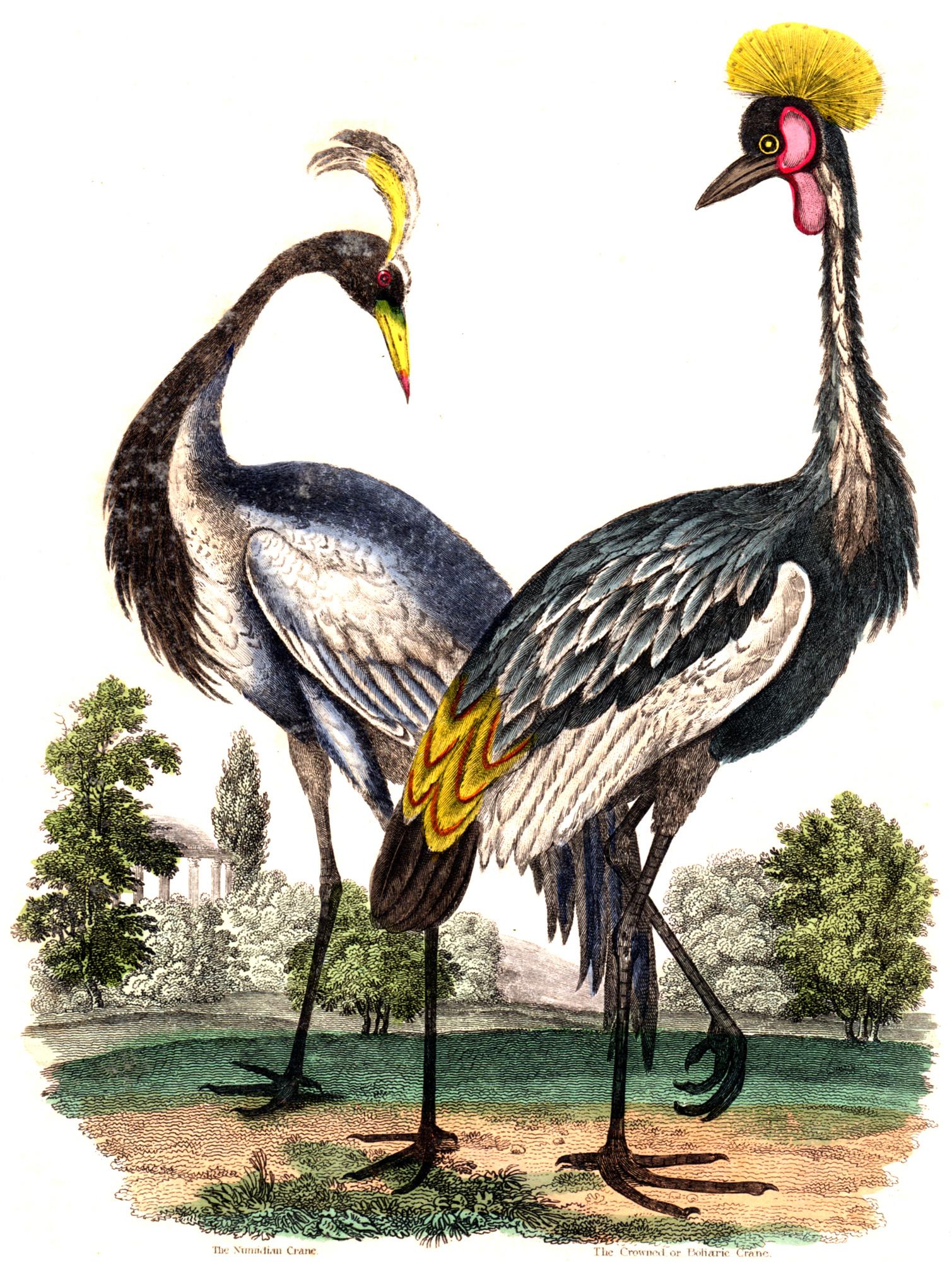 Buffon, Comte de –A Natural History 1834