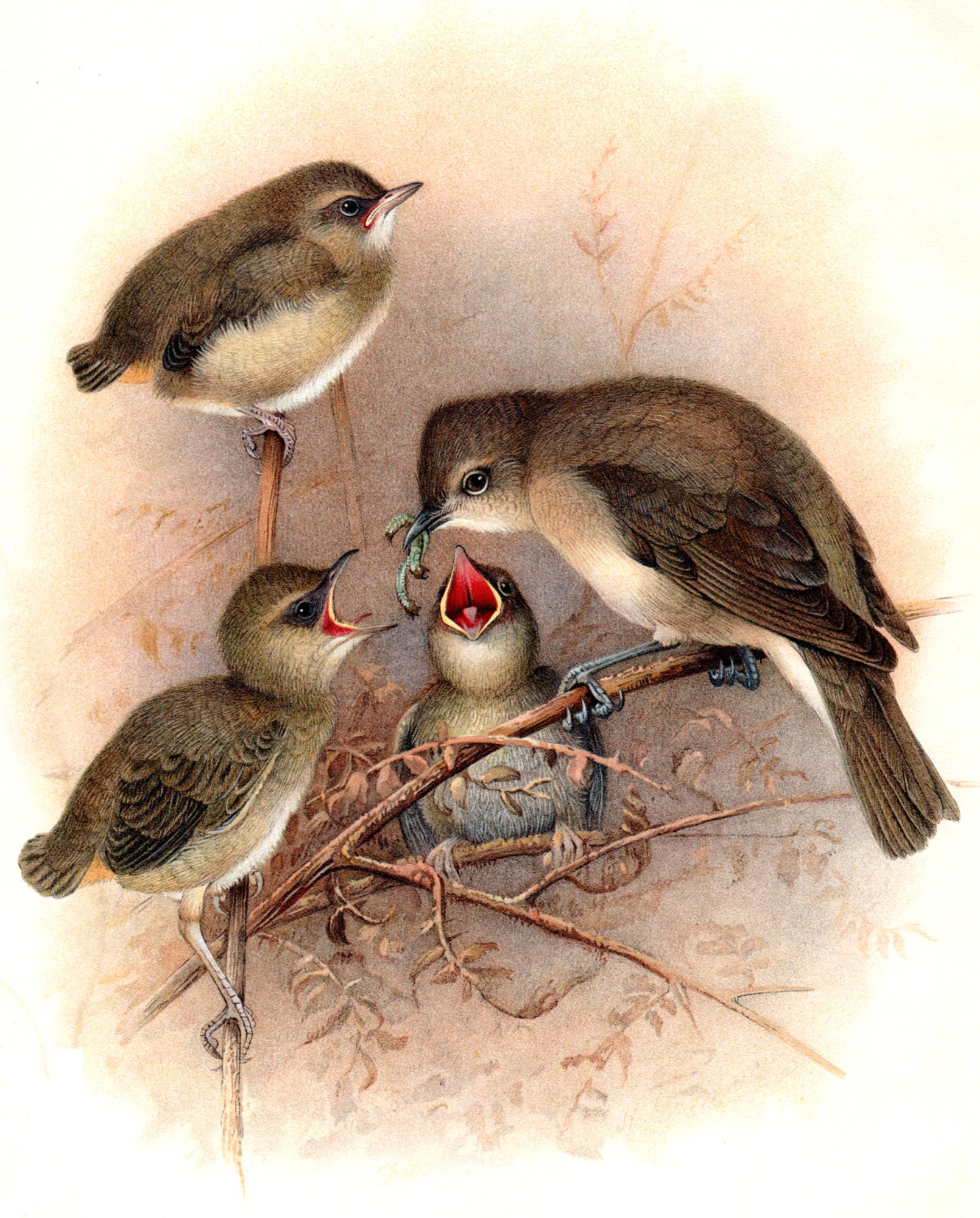 Butler / Groenvold / Frohawk –Warblers