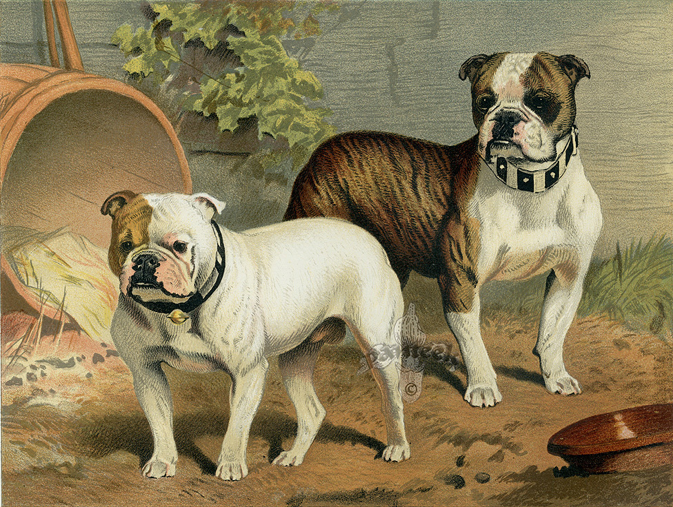 Cassell's Book of the Dog