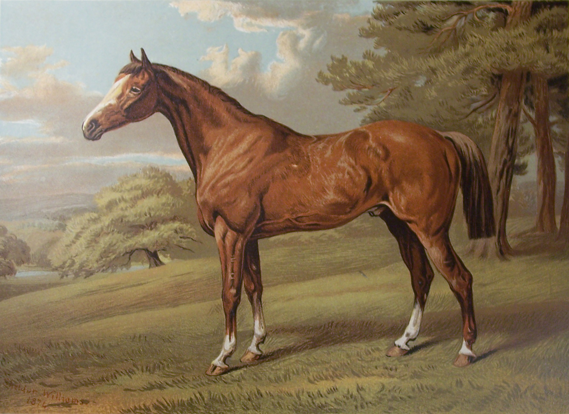 Cassell's Book of the Horse