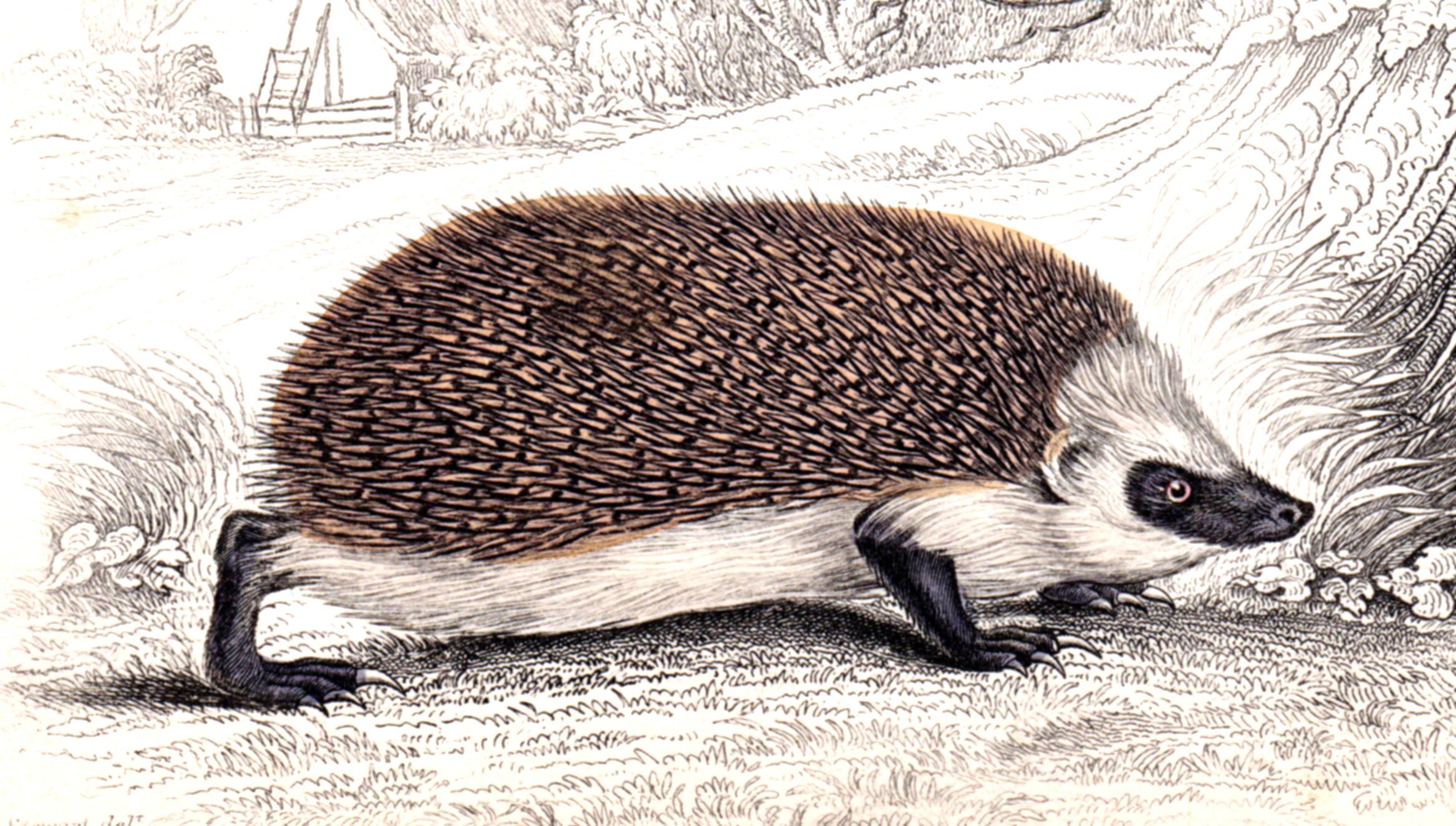 Jardine, Sir Wm / Lizars, Wm – Small Mammals