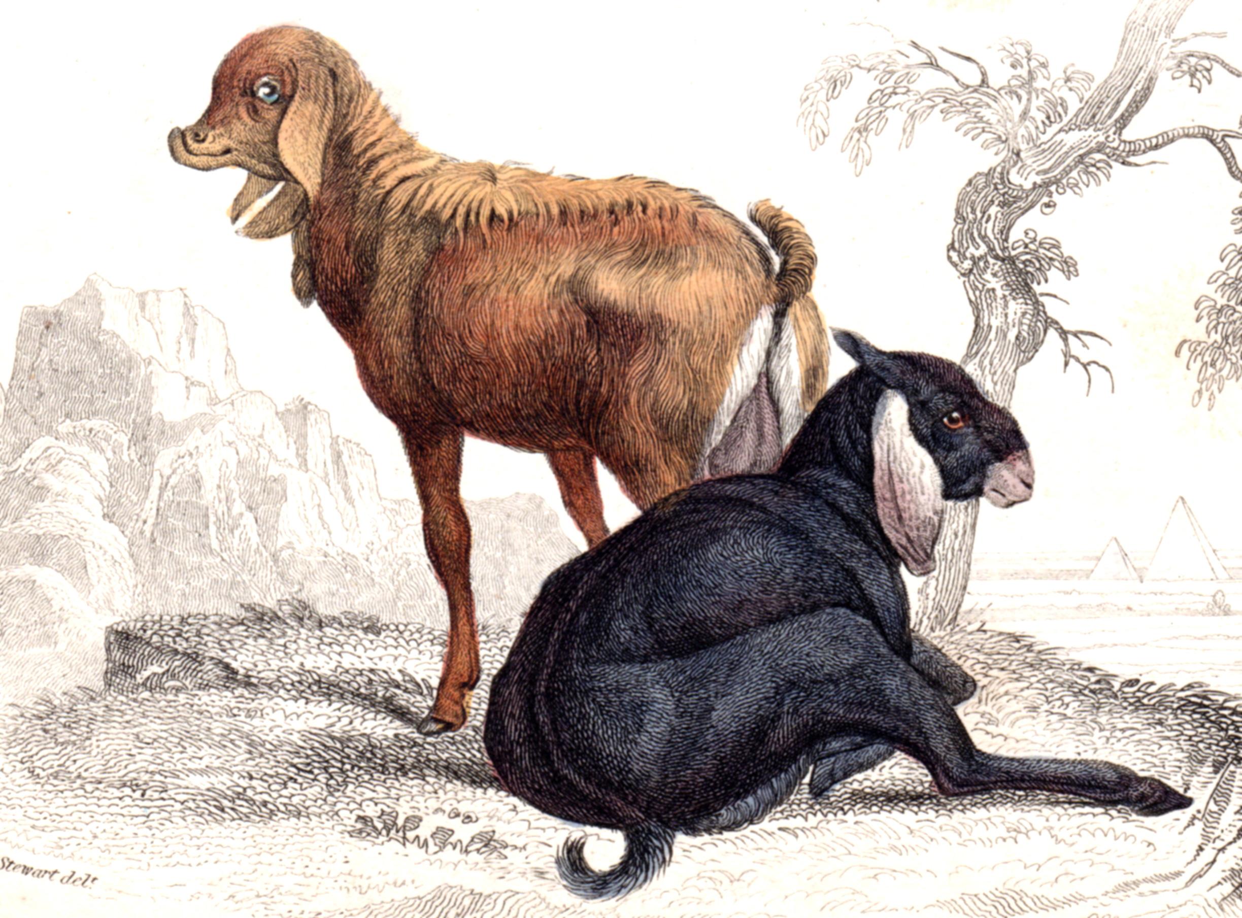 Jardine, Sir Wm / Lizars, Wm – Sheep, Goats, Cattle, etc.