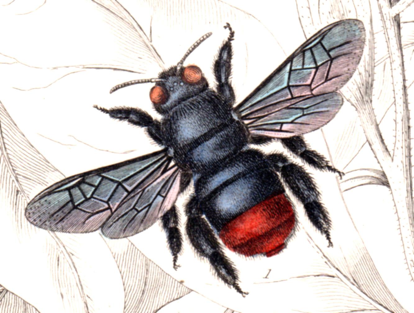 Jardine, Sir Wm / Lizars, Wm – Bees, Insects