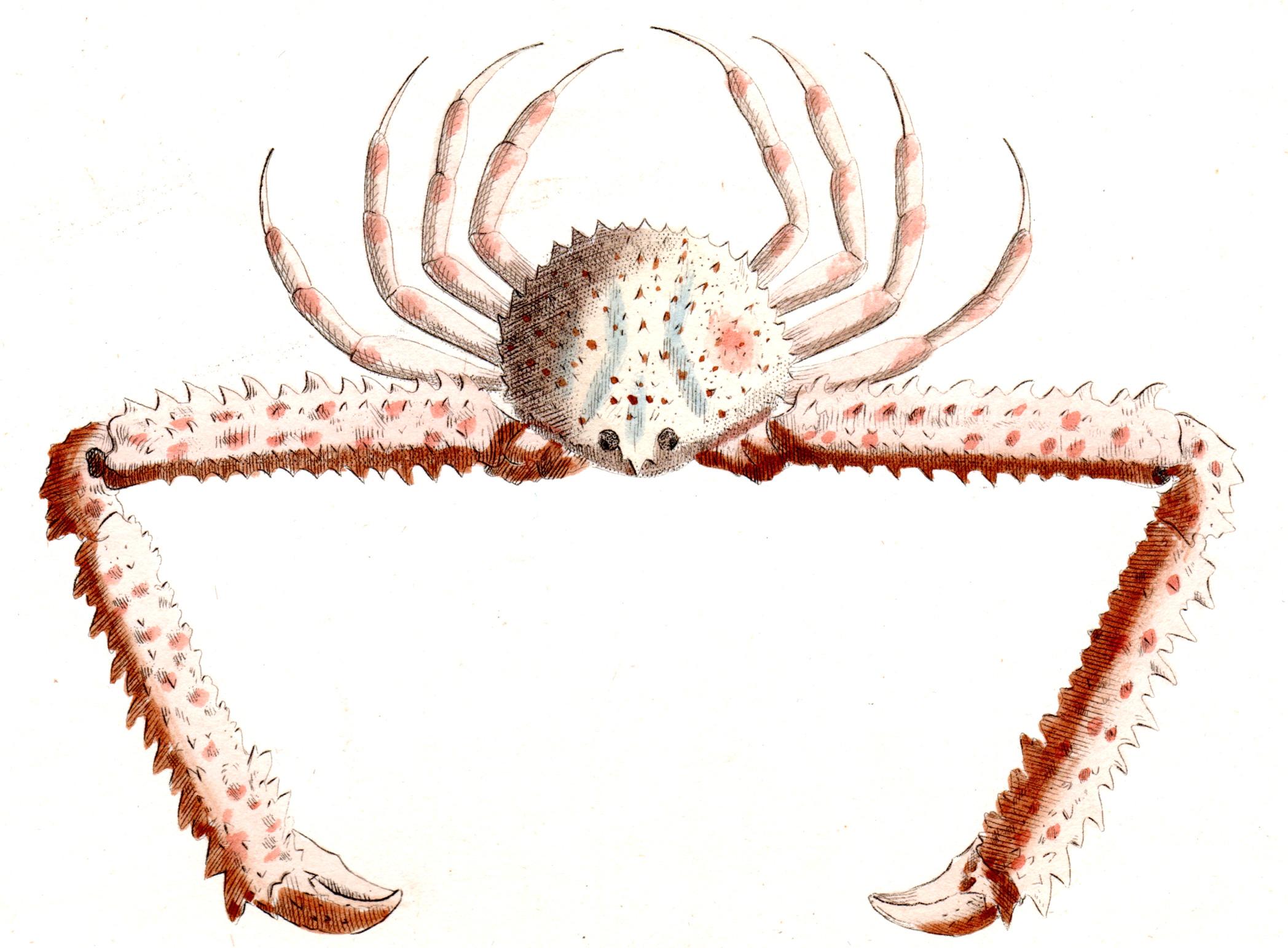 Shaw, George / Nodder, Frederick & Robert P. –Crabs, Shrimp, Lobsters, etc.
