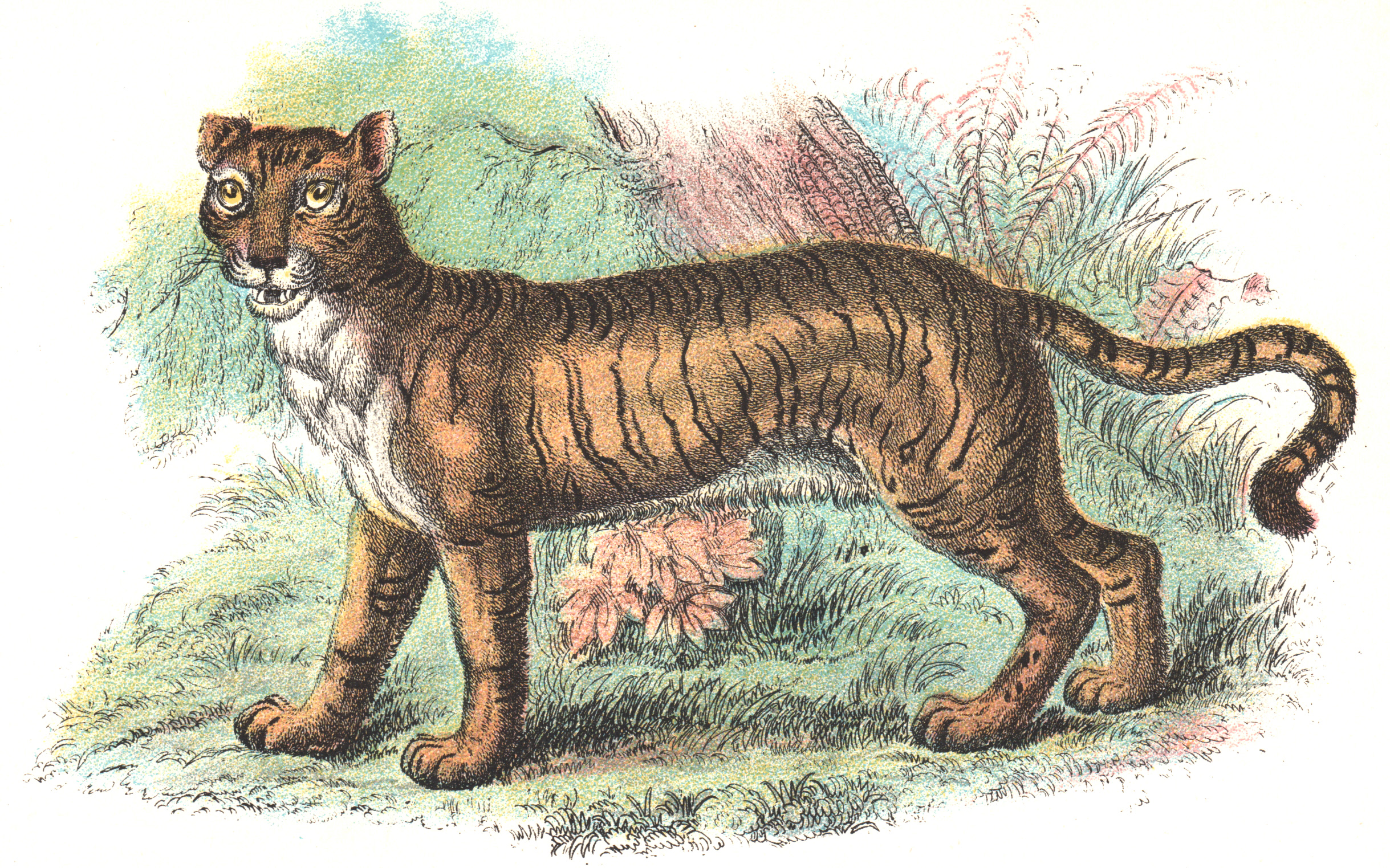 Wyman & Sons / Lloyd's Natural History –Big Cats