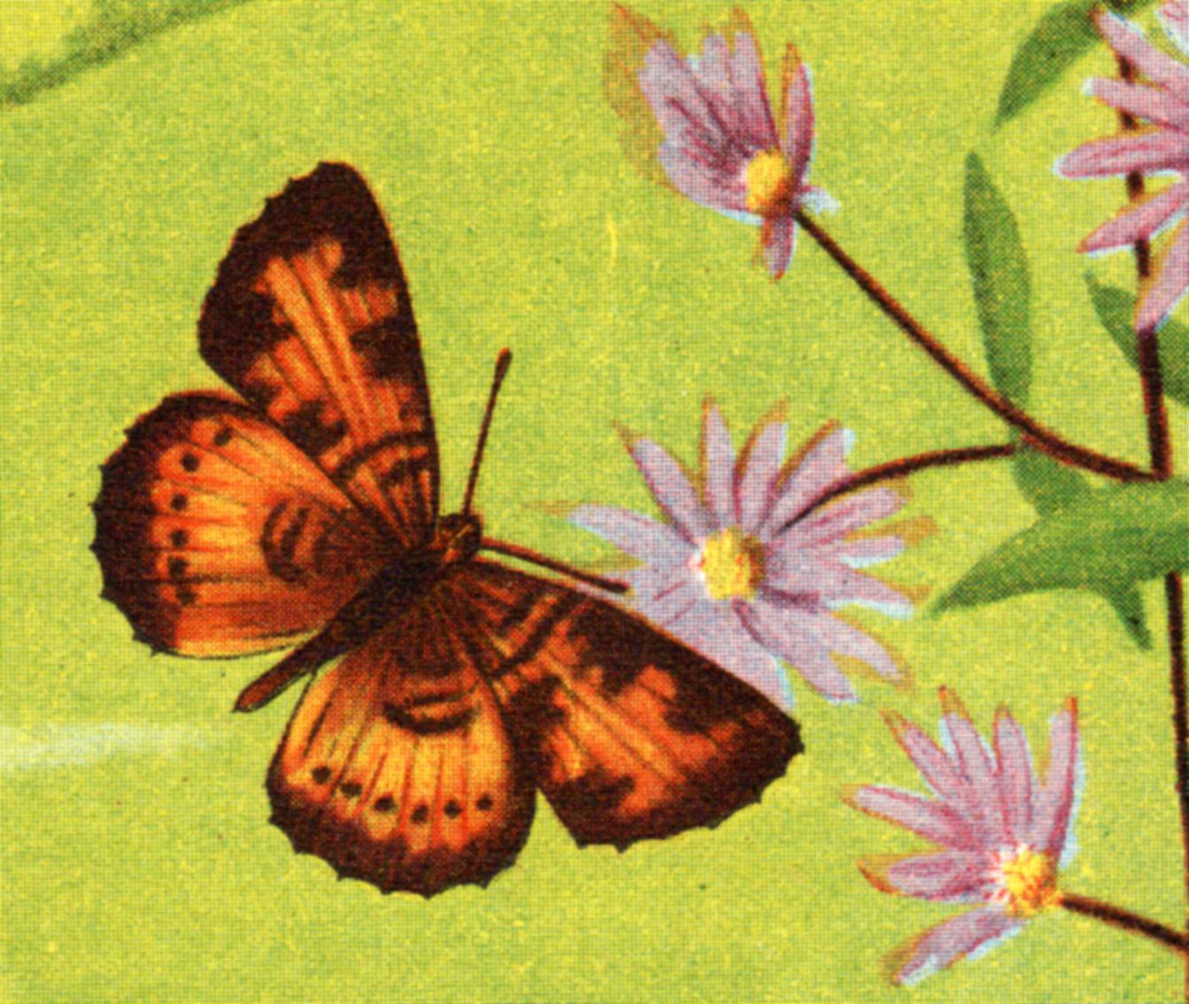Butterflies, circa 1890