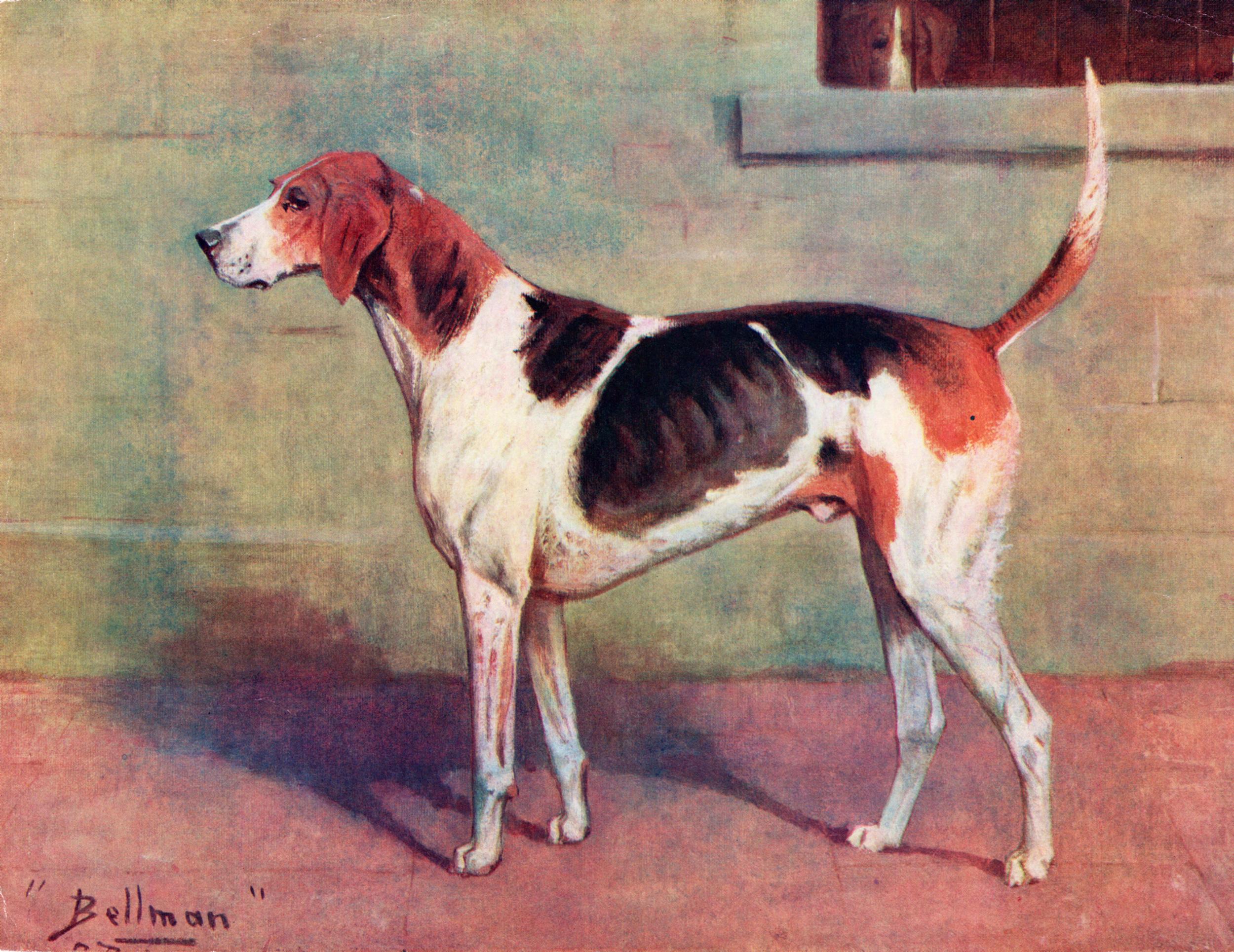 Miscellaneous Dog Prints
