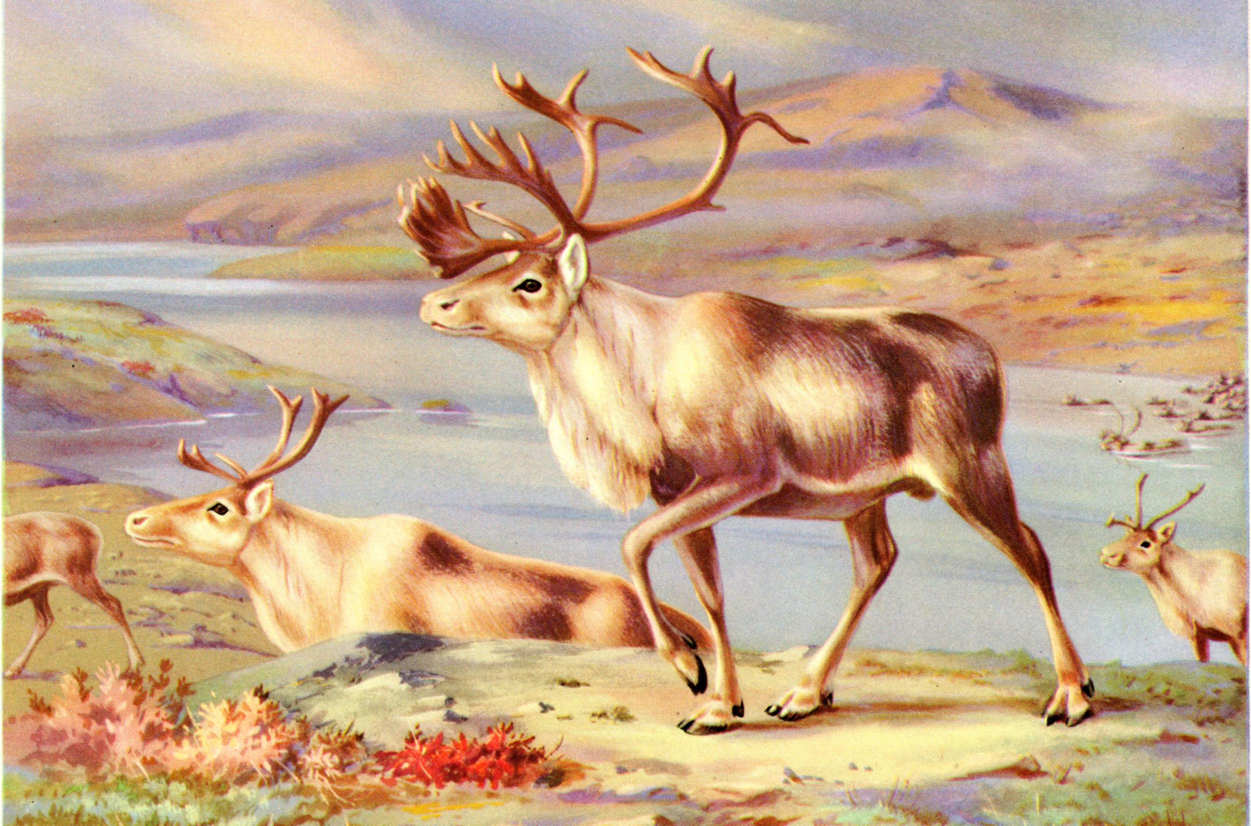 Walter Alois Weber vintage wildlife prints