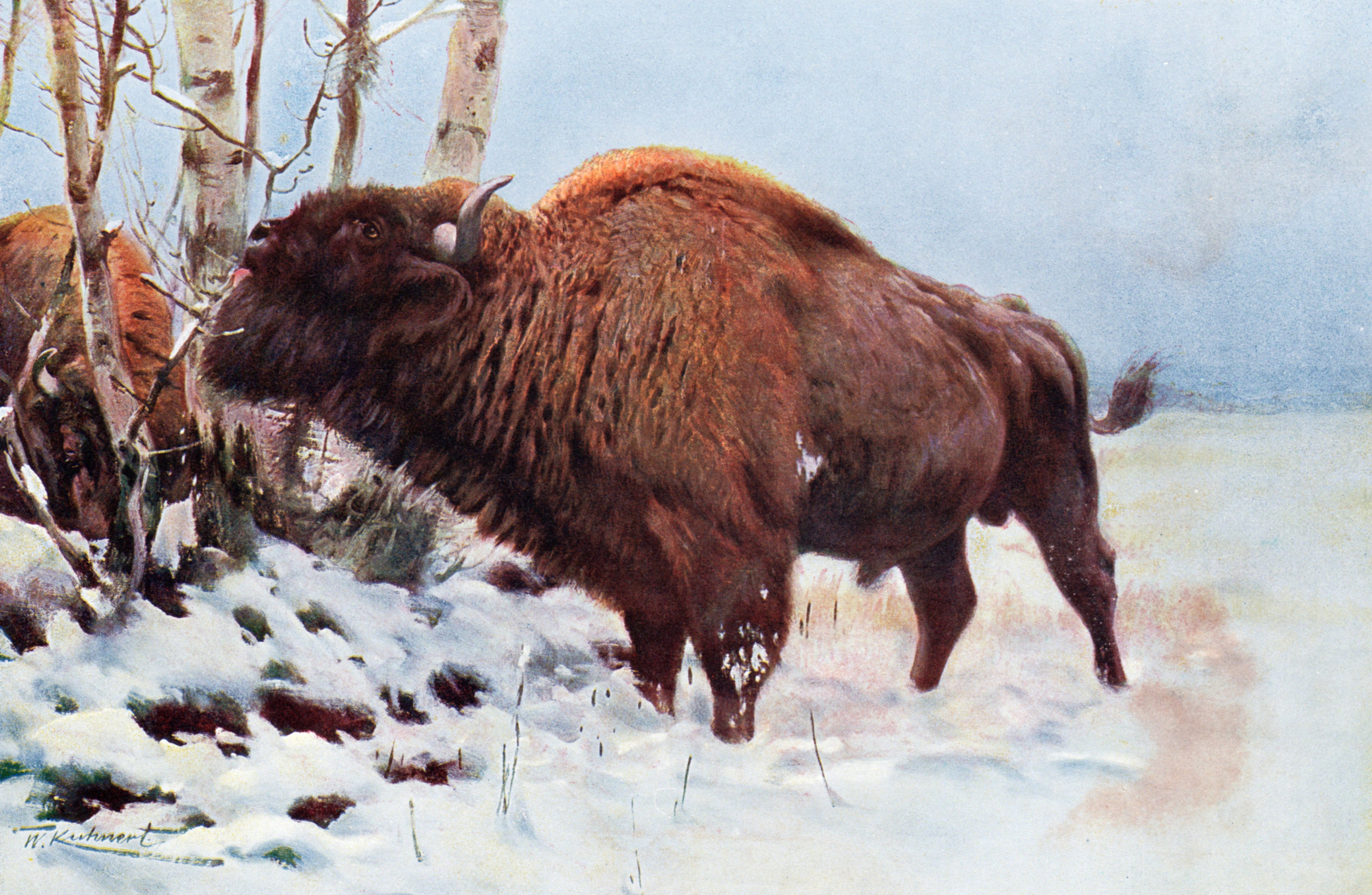 Harmsworth Natural History / Lydekker