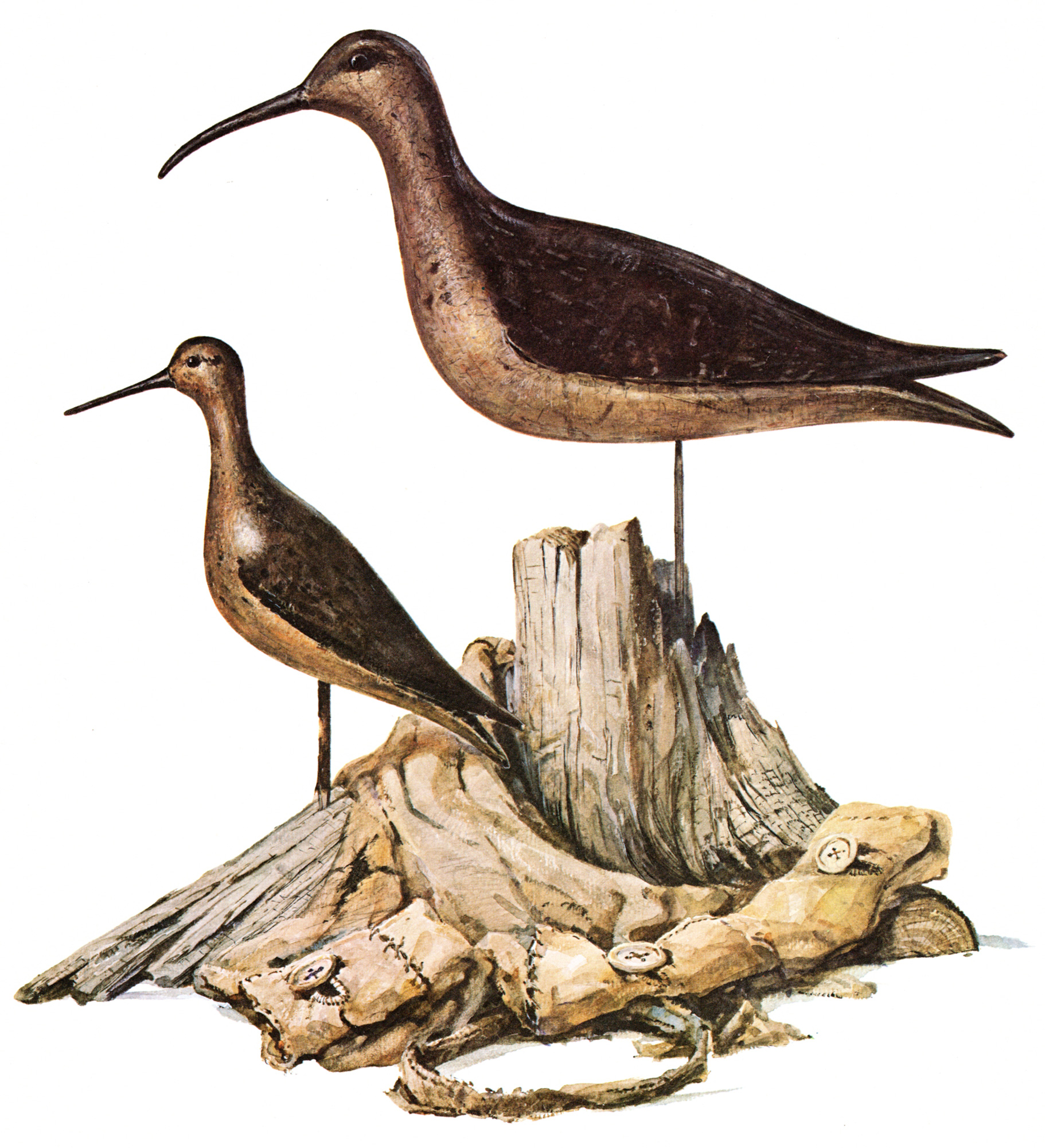 Weiler, Milton C. / Classic Shorebird Decoys