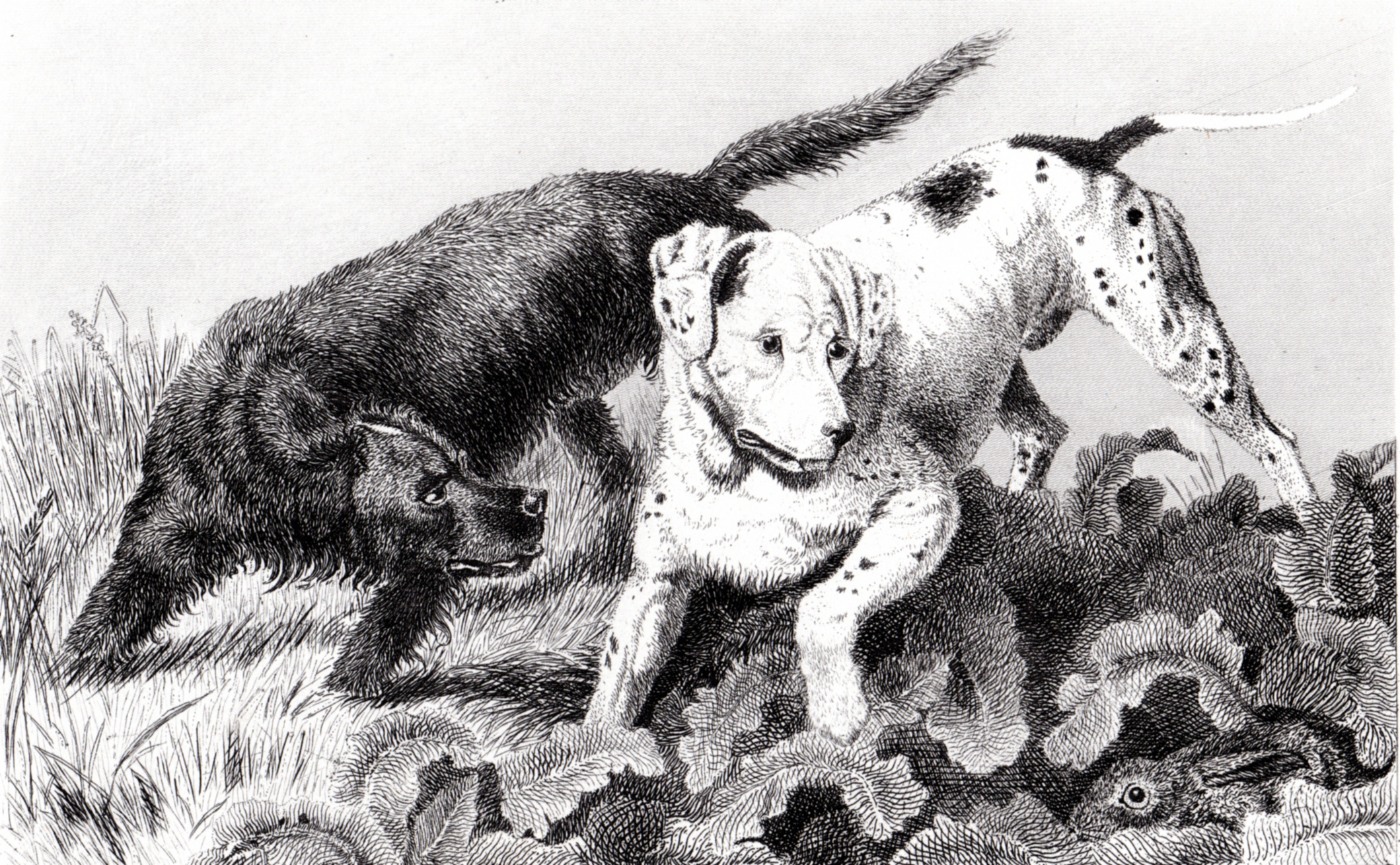 Landseer, Sir Edwin illustrations