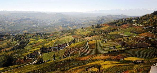 vineyard-1.jpg
