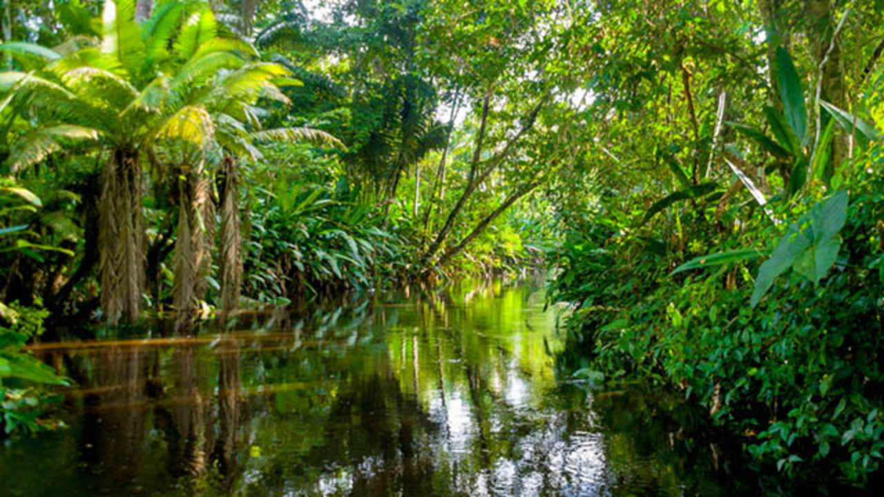floresta-amazonica-1280x720.jpg