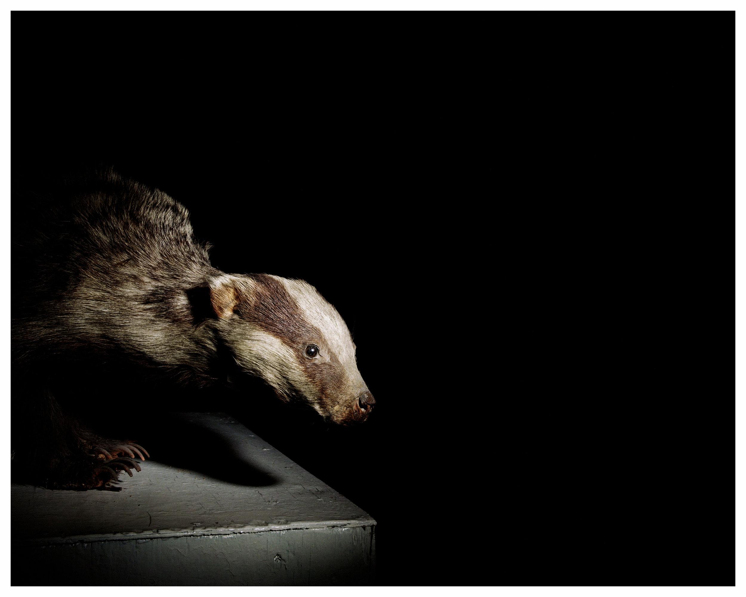 _beaver-24-by-30-carolyn.jpg
