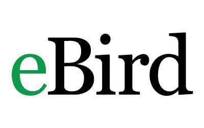 Wondering what birds you can find on Nantucket? Check out the link to eBird for recent sightings and species information! -